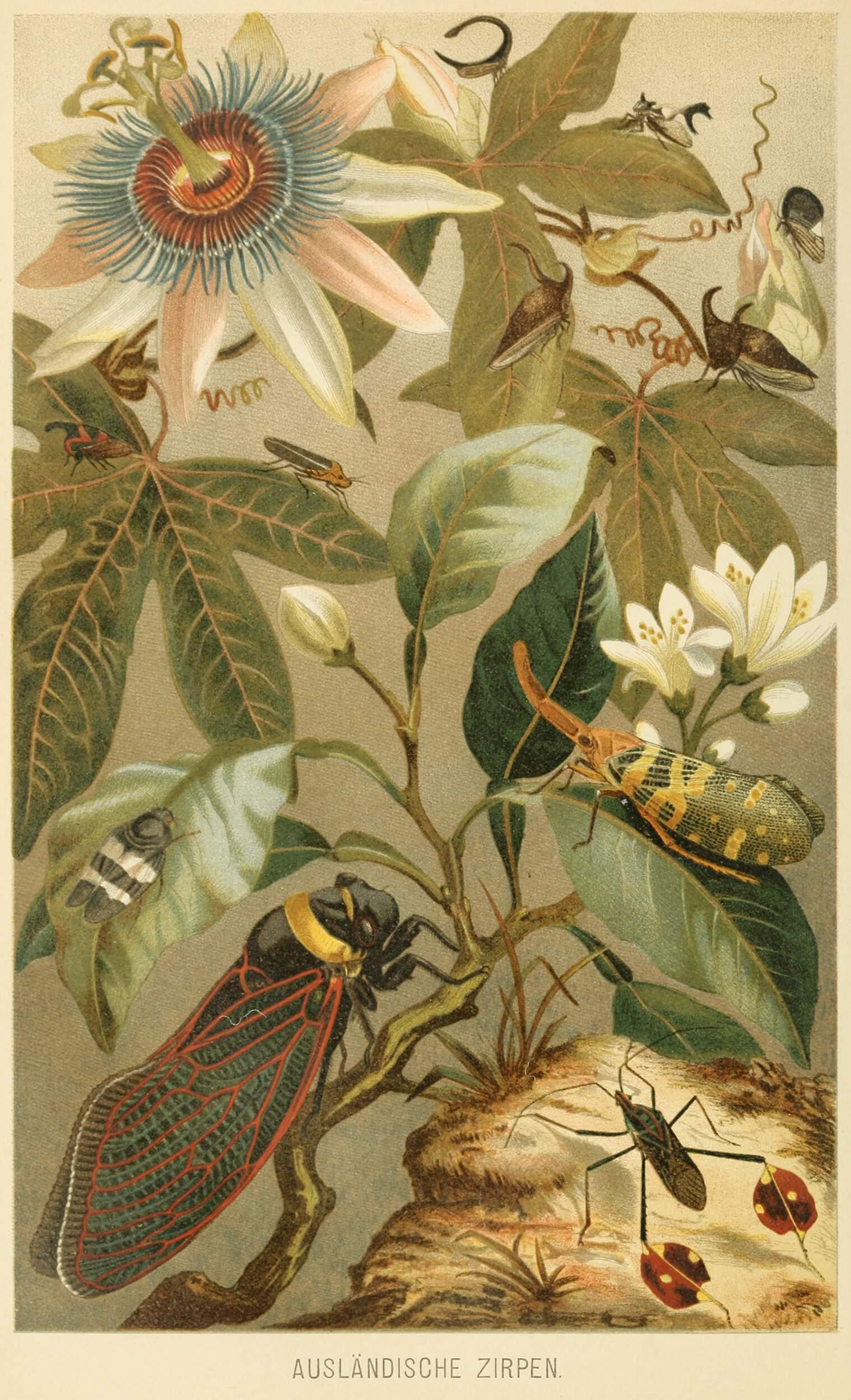 Las edades del escarabajo